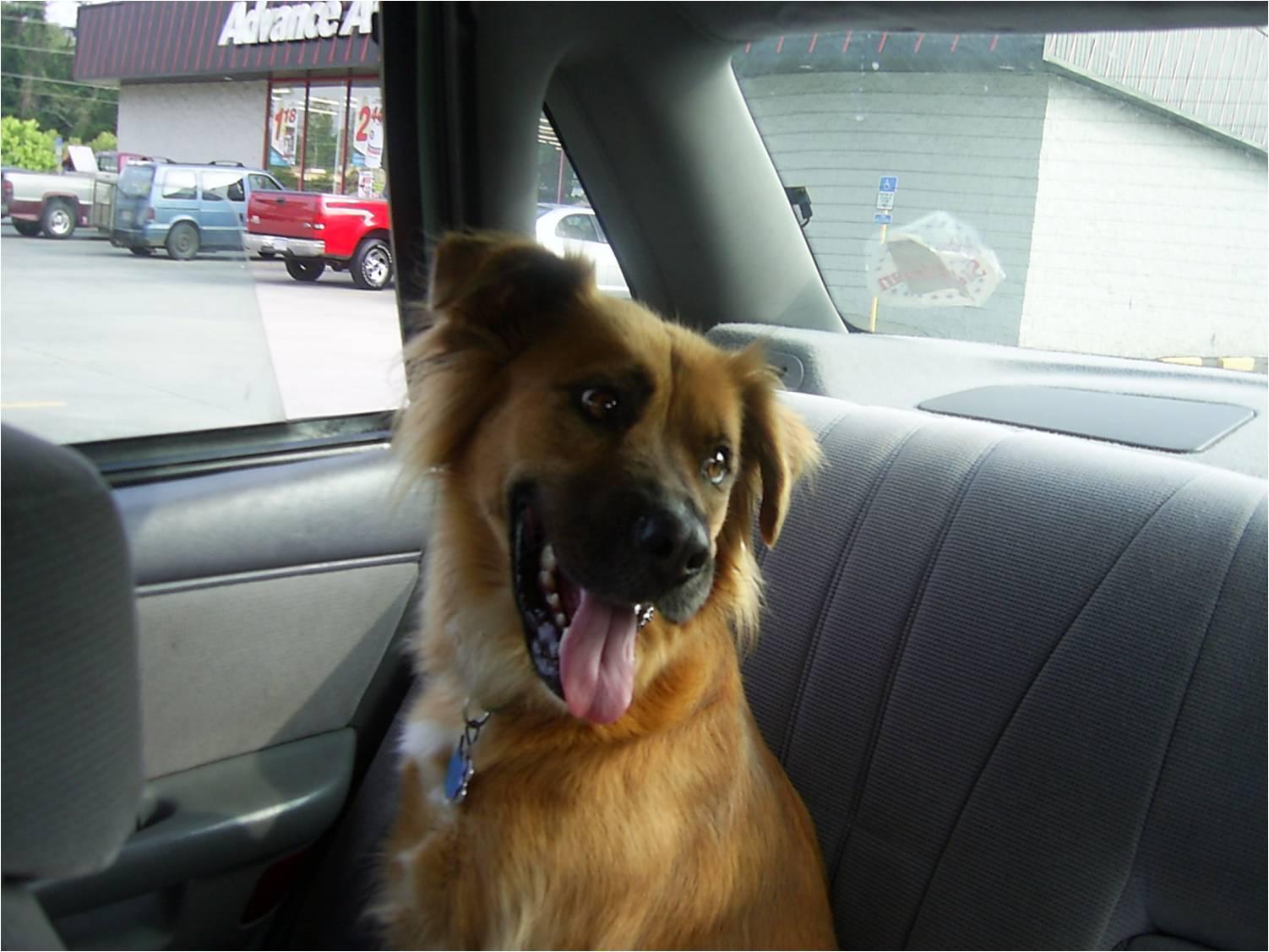 Image Result For Stick Dog Wants