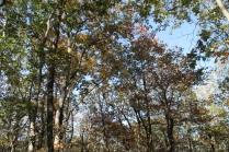 fall 155