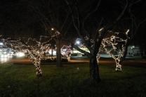 lights 096