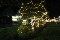 lights 109