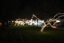 lights 185