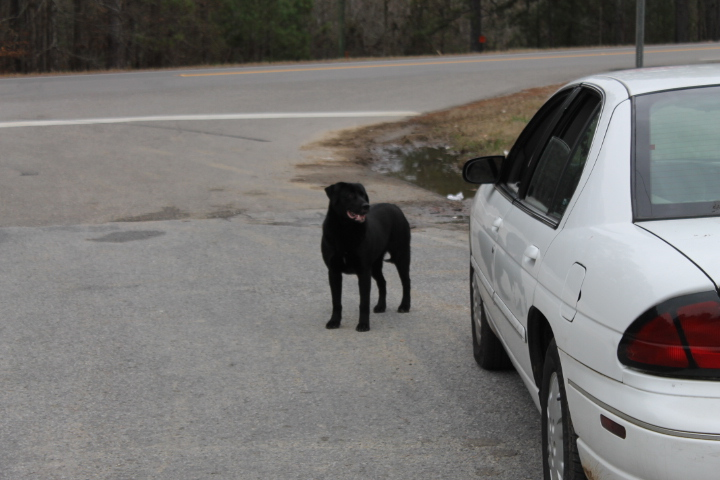 Dog Rescue Alabama