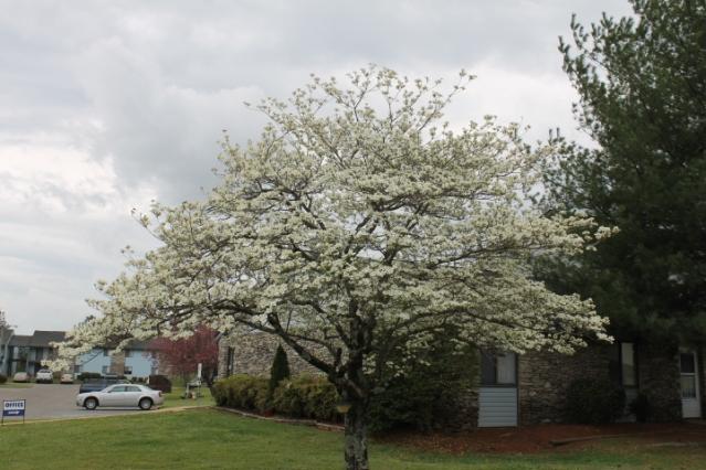 pollen 004
