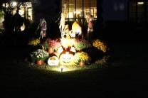 halloween 336