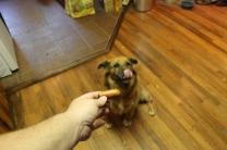 dog 010 (2)