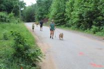 US Canine Biathlon (2)