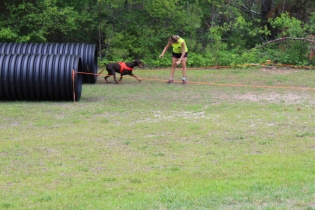 US Canine Biathlon (33)