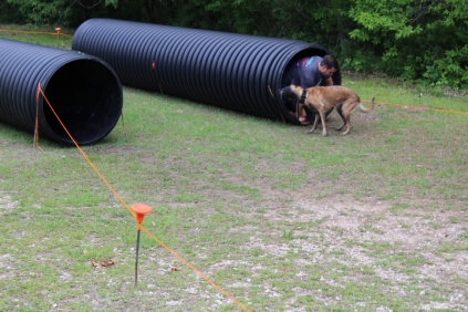 US Canine Biathlon (34)