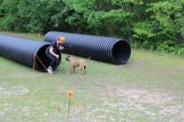 US Canine Biathlon (41)