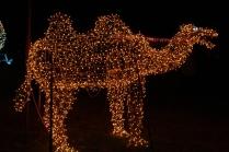 Gilley's Christmas Lights '17 (4)
