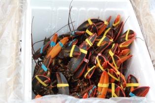 Lobsterfest 2018 (11)