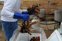 Lobsterfest 2018 (14)
