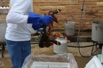 Lobsterfest 2018 (15)