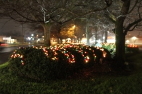 Quintard Median Christmas Lights 2018 (52)