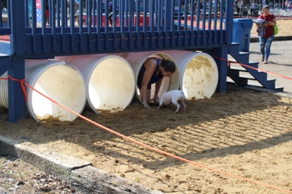 US Canine Biathlon 2019 (42)